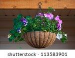 Colorful Petunia In  Hanging...