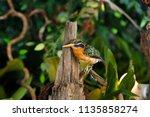 bird taxidermy. selective focus. - stock photo