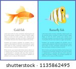 butterfly and gold fish cartoon ... | Shutterstock .eps vector #1135862495