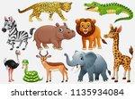 cartoon wild animals on white... | Shutterstock .eps vector #1135934084