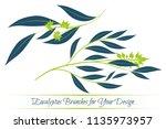 eucalyptus vector. decorative...   Shutterstock .eps vector #1135973957