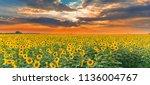 Sunflower Field On Sunset....