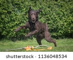 chocolate labrador playing with ... | Shutterstock . vector #1136048534
