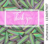 pink thank you card with green... | Shutterstock .eps vector #1136057837