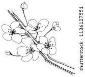 sakura in a vector style... | Shutterstock .eps vector #1136127551