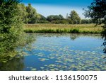 water landscape in  national... | Shutterstock . vector #1136150075