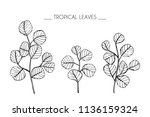 collection set of tropical leaf ... | Shutterstock .eps vector #1136159324