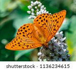 a beautiful butterfly sits on a ... | Shutterstock . vector #1136234615