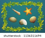 sea shells and starfish with... | Shutterstock .eps vector #1136311694