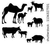 silhouettes farm animals and... | Shutterstock .eps vector #1136327531