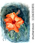 wonderful tropical flowers ... | Shutterstock . vector #1136331851