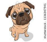 cute cartoon pug dog isolated... | Shutterstock .eps vector #1136347541