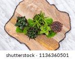 plants arrangement with...   Shutterstock . vector #1136360501