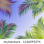 green leaf of palm tree... | Shutterstock . vector #1136595374