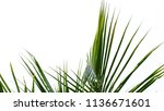 tropical tree isolated on white   Shutterstock . vector #1136671601