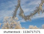 detail of branches glazed with... | Shutterstock . vector #1136717171