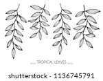 collection set of tropical leaf ... | Shutterstock .eps vector #1136745791