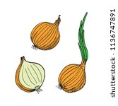 green onion plant  onion and... | Shutterstock .eps vector #1136747891