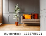 ficus next to brown couch with... | Shutterstock . vector #1136755121