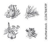 vector hand drawn herbs and... | Shutterstock .eps vector #1136786939