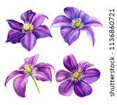beautiful flowers  set purple...   Shutterstock . vector #1136860721