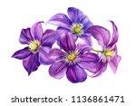 beautiful flowers  purple... | Shutterstock . vector #1136861471