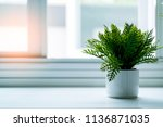 white flower with grey wall... | Shutterstock . vector #1136871035