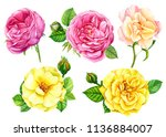 beautiful set of yellow and... | Shutterstock . vector #1136884007