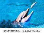 dolphin eat fish in water. cute ... | Shutterstock . vector #1136940167