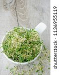 fast growing micro greens  for... | Shutterstock . vector #1136955119
