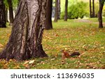Squirrel Sitting On The Ground...