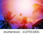 photo of bright tropical... | Shutterstock . vector #1137011831