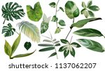 Small photo of Tropical leaves variegated foliage exotic nature plants set isolated on white background, clipping path with plant common name included (Monstera, palm leaf, Devil's ivy, ginger, heliconia, bamboo)