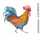 colorful watercolor rooster.... | Shutterstock . vector #1137093737