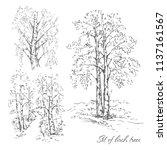 hand drawn set of birch trees... | Shutterstock .eps vector #1137161567