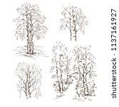 hand drawn set of birch trees... | Shutterstock .eps vector #1137161927