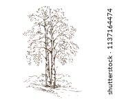 hand drawn birch trees on white ... | Shutterstock .eps vector #1137164474