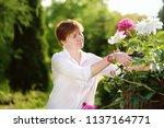 portrait of smiling beautiful...   Shutterstock . vector #1137164771