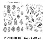 set of pine cones and conifer... | Shutterstock . vector #1137168524