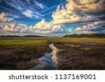 low country scene on hilton... | Shutterstock . vector #1137169001