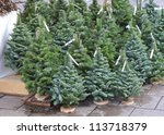 Christmas Trees For Sale ...