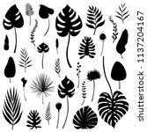 set of black isolated... | Shutterstock .eps vector #1137204167