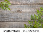 green leaves on wooden... | Shutterstock . vector #1137225341