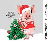 pig in a santa's red costume... | Shutterstock .eps vector #1137248387