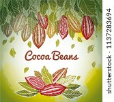 cacao beans plant  vector... | Shutterstock .eps vector #1137283694