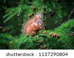 The Little Squirrel Feasting...