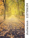 landscape with beautiful autumn ... | Shutterstock . vector #1137306194