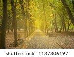 landscape with beautiful autumn ... | Shutterstock . vector #1137306197