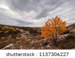 beautiful autumn landscape with ... | Shutterstock . vector #1137306227
