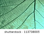 texture of a dry leaf as... | Shutterstock . vector #113738005